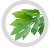 https://www.voshuiles.com/infos/301-huile-essentielle-de-liveche