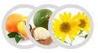Guide huiles végétales